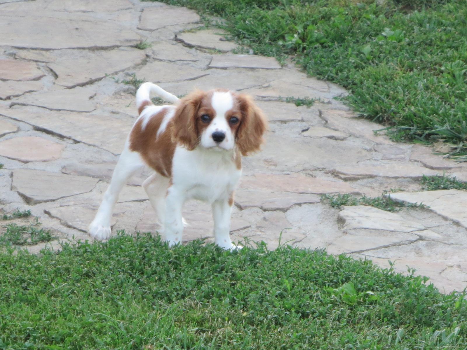 Lewis - Maya and Rusty Pup 2014